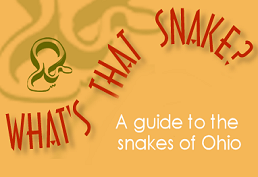 What Snake is it? landing page